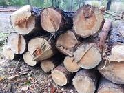 Продам дрова оптом в Днепре и области.